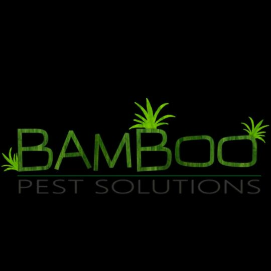 Bamboo Health Solutions